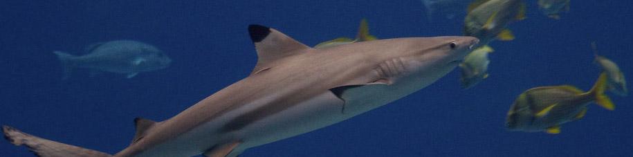 Journée en famille à l'Aquarium du Cap d'Agde